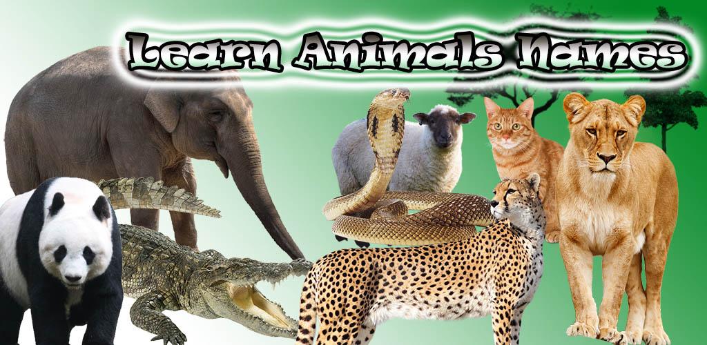 تعليم أسماء الحيويانات باللغة الانجليزية