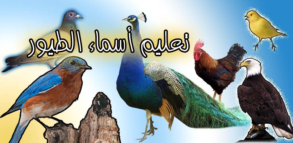 تعليم أسماء الطيور
