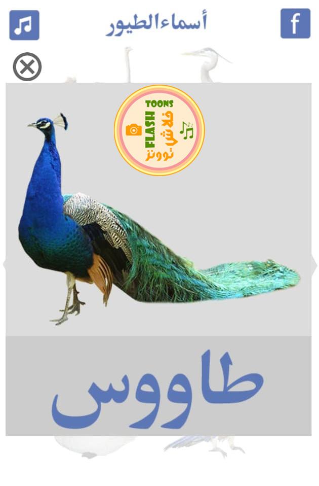 صور طيور - طاووس