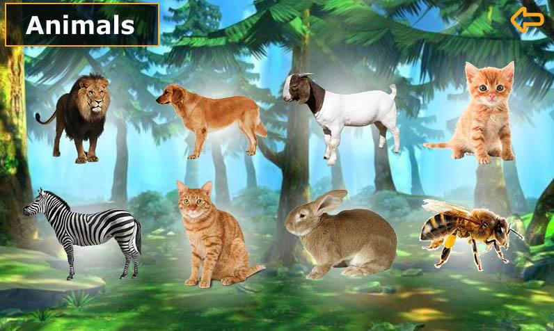 انجليزي الصف الأول - الحيوانات