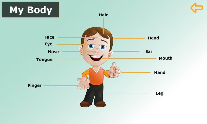 انجليزي-الصف-الأول-My-body-مكونات-الجسم