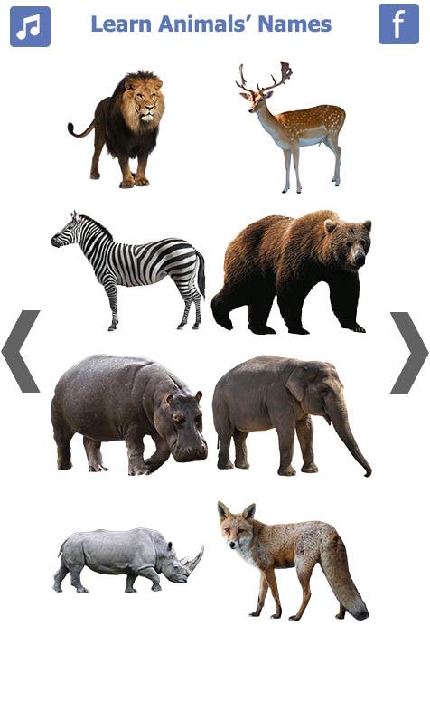 تعليم-أسماء-الحيويانات-باللغة-الانجليزية-1