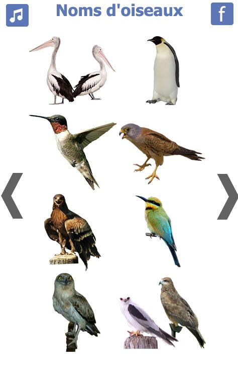 تعليم-الطيور-باللغة-الفرنسية-4